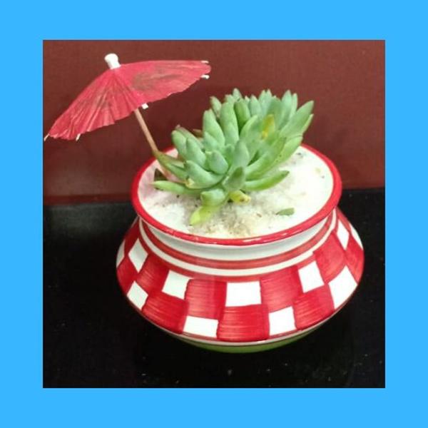 Terracotta pot with Succulent