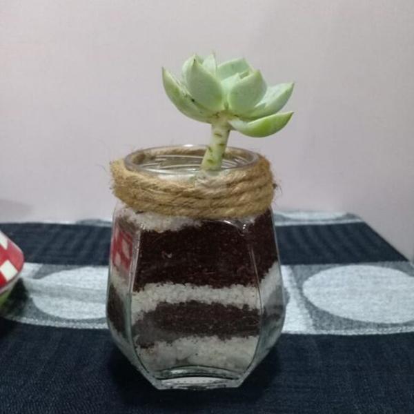Mason Jar with Succulent