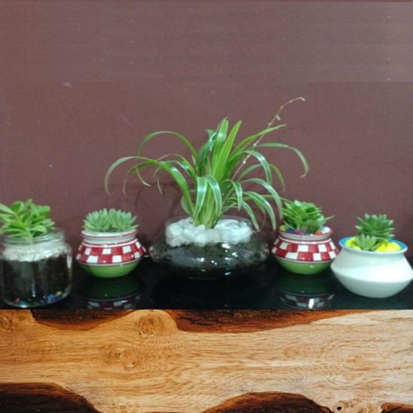 Set of 5, Indoor plants in Glass and Terracotta pots