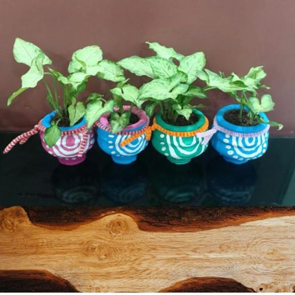 Set of 4, Indoor plants in Terracotta pots