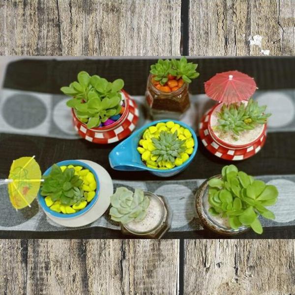 Set of 7, Indoor plants in Glass and Terracotta pots