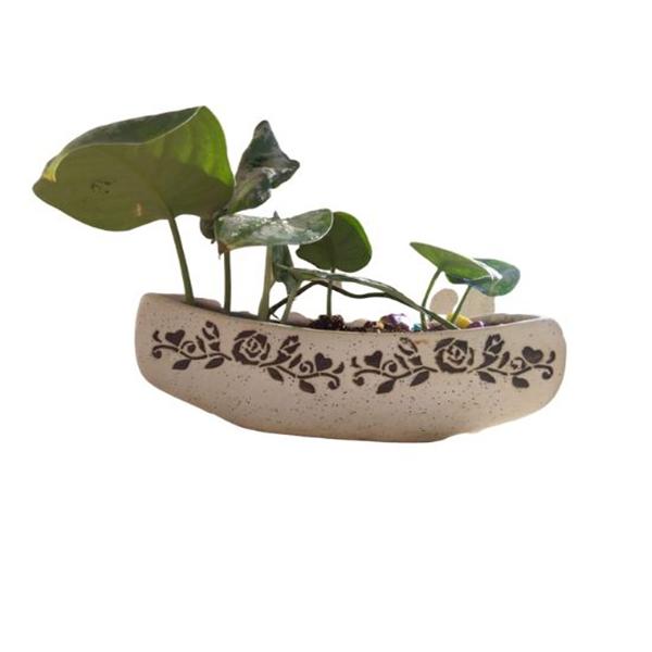 Boat shape planter with Sathin Pothos plant