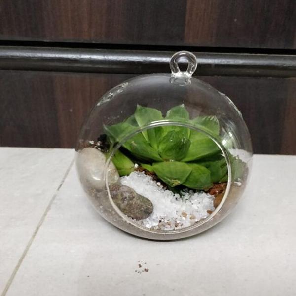 Hanging Drop Terrariums with  single succulent
