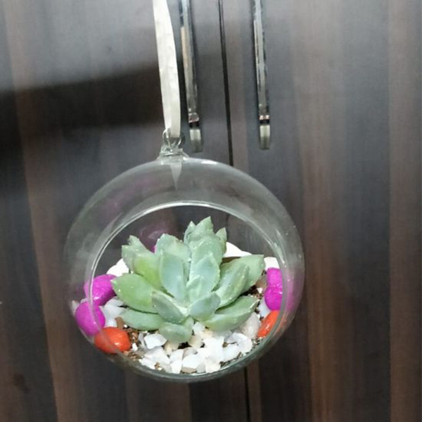 Hanging Drop Terrariums with  single succulent