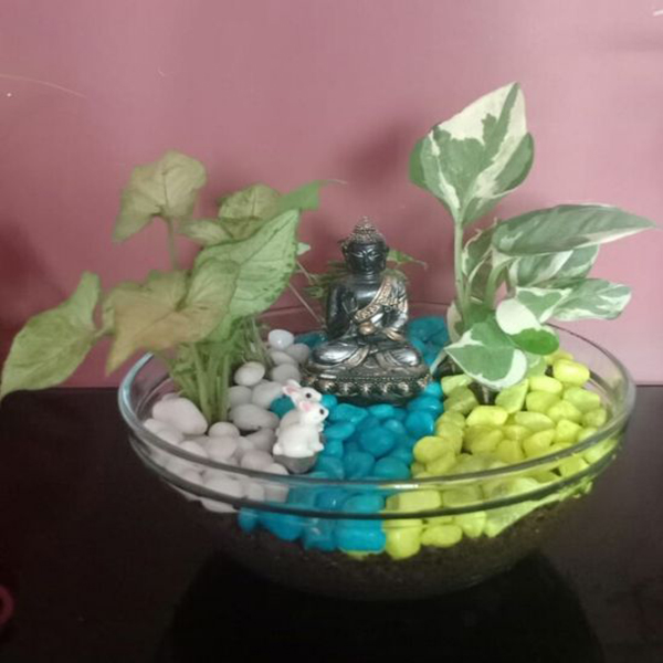 Open Bowl Terrarium with Miniature with Indoor Plants