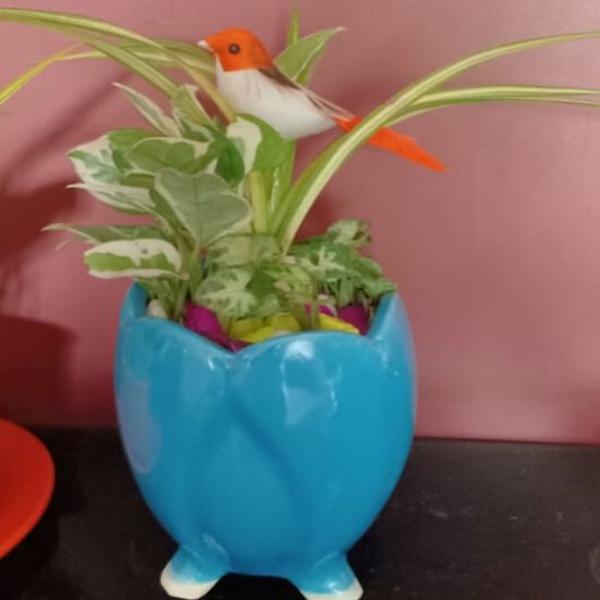 Indoor plants in Blue Terracota Pot
